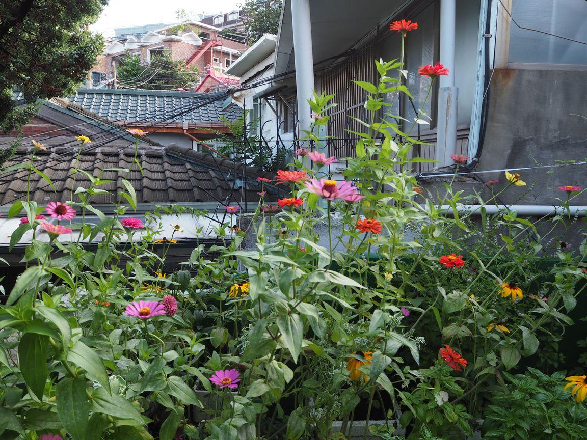 ユジンさんの庭の花